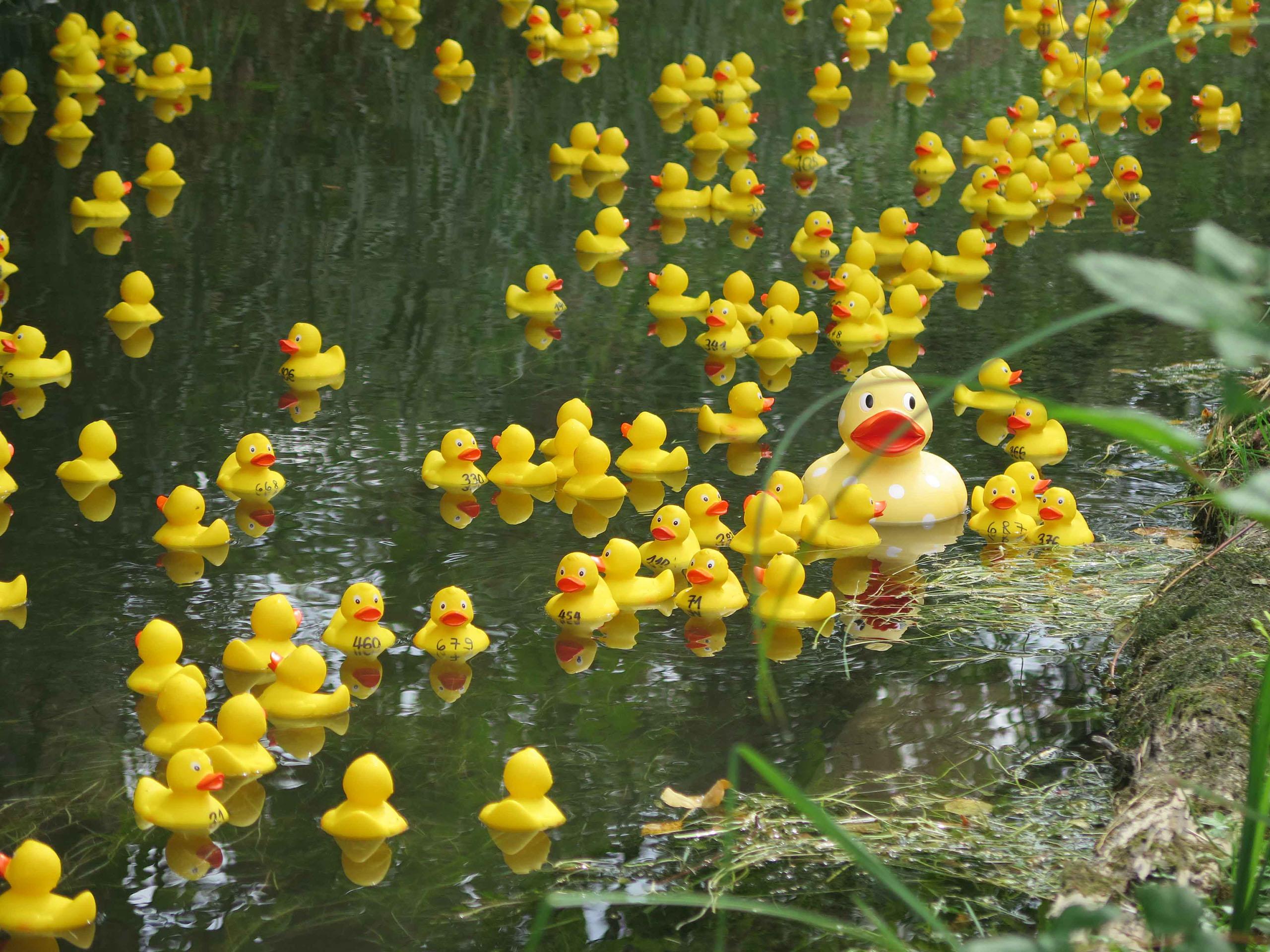 Quackers Ch Die Sch 246 Nsten Badeenten Der Schweiz